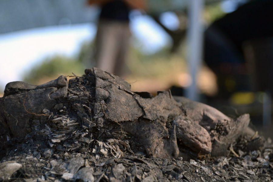 Muge Mesolithic Shellmiddens