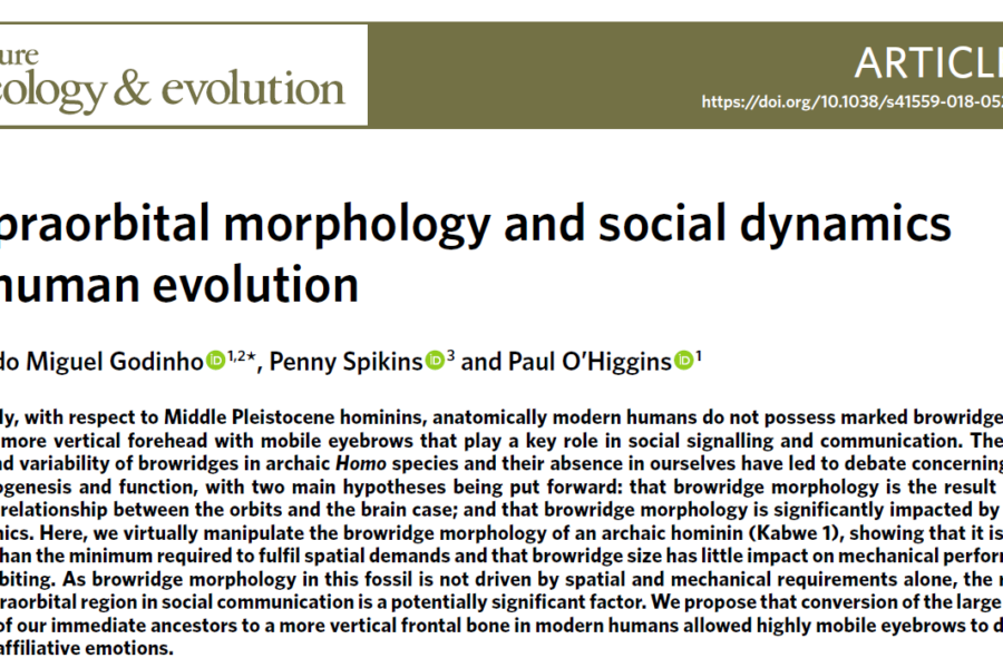 Supraorbital morphology and social dynamics in human evolution – new paper out in NatureEcoEvo