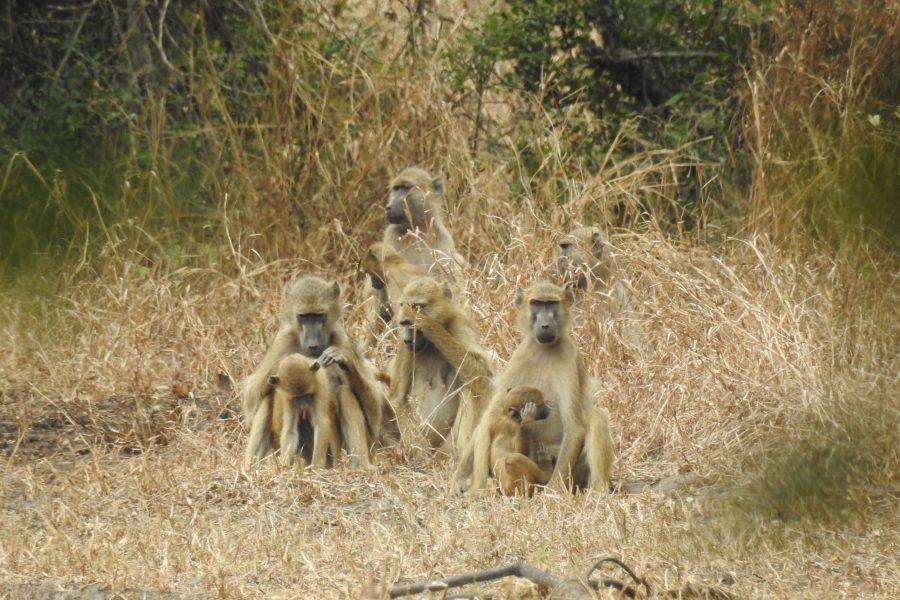 Paleo-Primate Project Gorongosa