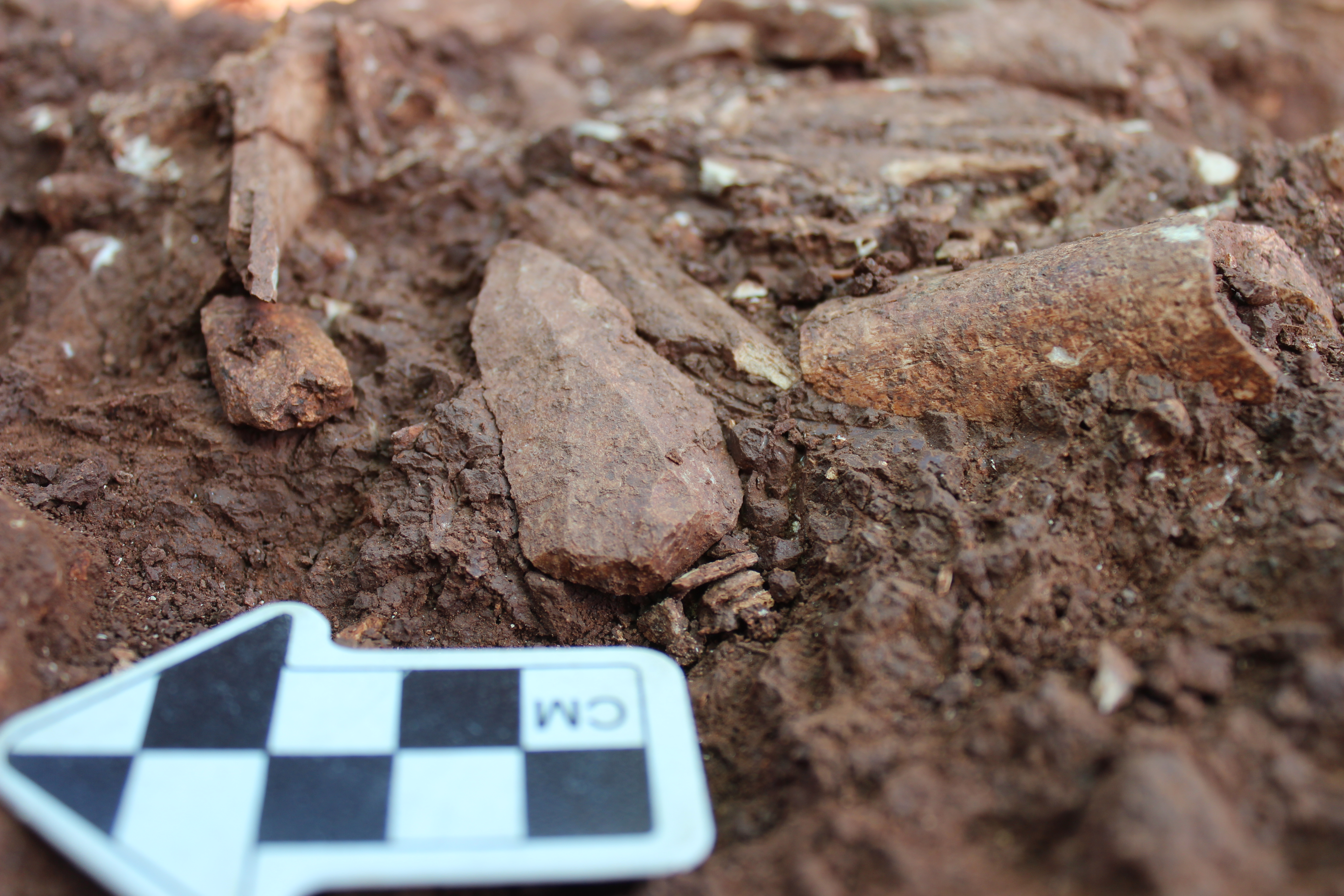 ICArEHB gets 500 thousand euros for two new projects on the Middle-Upper Paleolithic of Algarve and the Muge shellmiddens